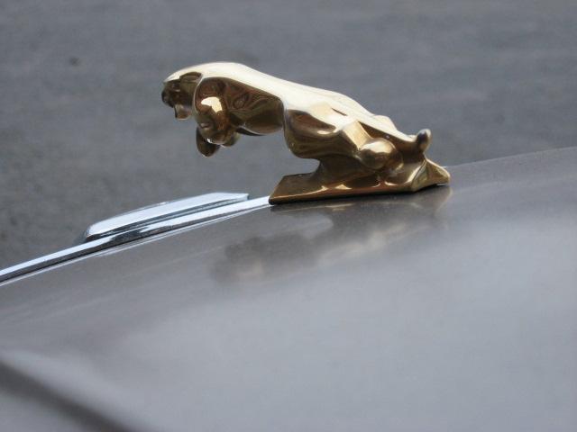 Jaguar%20031